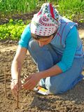 IStock_DLeonis_sowing